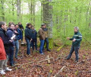 Forêt Domaniale de Châtillon-sur-Seine